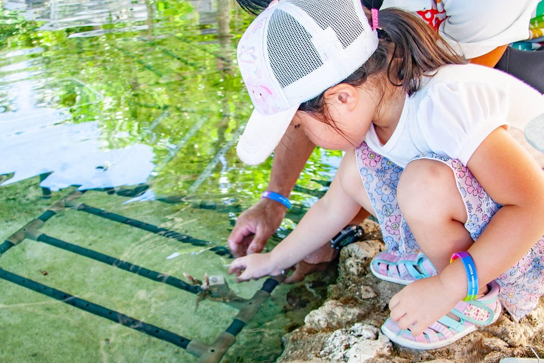 【7/24、7/25】恩納村のサンゴを救え!イノー探検&サンゴ植え付け体験